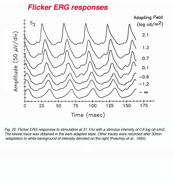 The Electroretinogram: ERG by Ido Perlman – Webvision