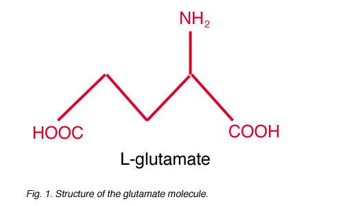 Glutamate and glutamate receptors in the vertebrate retina ...