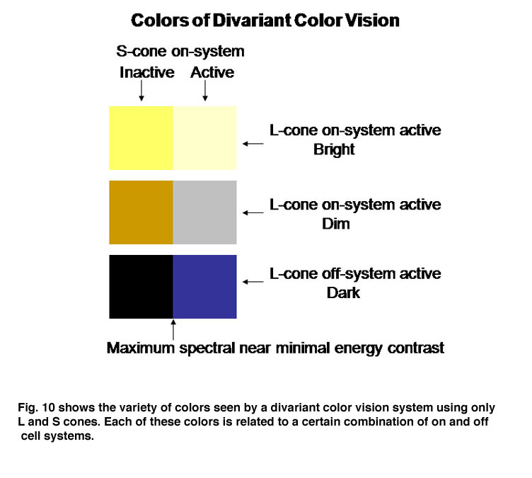 10 Shows The Variety Of Colors Seen By A Divariant Color Vision System Using Only L And S Cones Each These Is Related To Certain Combination