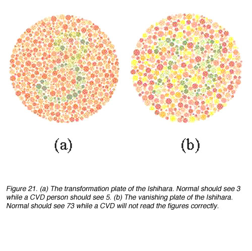 Color Perception by Michael Kalloniatis and Charles Luu  Webvision