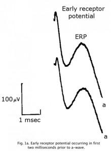 ERP1a